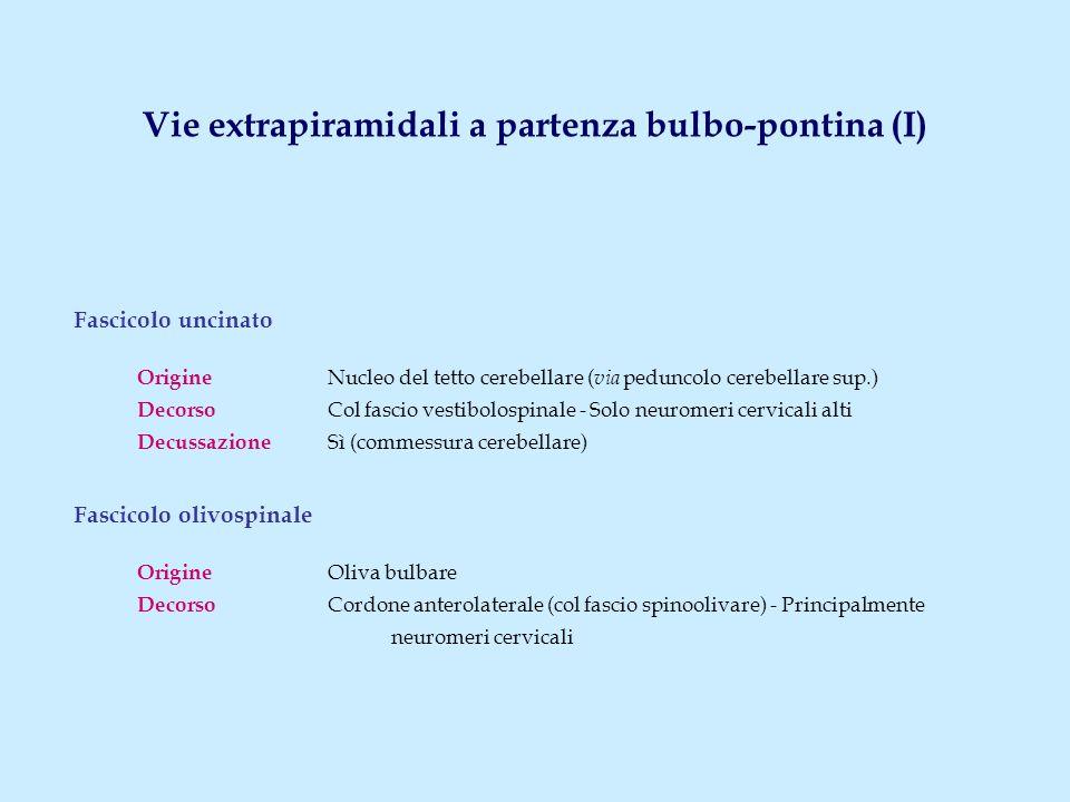 Fascicolo uncinato Origine Nucleo del tetto cerebellare ( via peduncolo cerebellare sup.) Decorso Col fascio vestibolospinale - Solo neuromeri cervicali alti Decussazione Sì (commessura cerebellare) Fascicolo olivospinale Origine Oliva bulbare Decorso Cordone anterolaterale (col fascio spinoolivare) - Principalmente neuromeri cervicali Vie extrapiramidali a partenza bulbo-pontina (I)