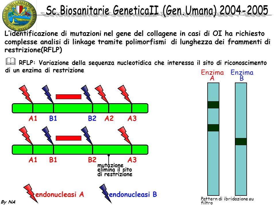 By NA L'identificazione di mutazioni nel gene del collagene in casi di OI ha richiesto complesse analisi di linkage tramite polimorfismi di lunghezza
