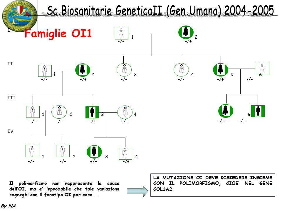 By NA 12 1 2 3 4 5 6 1 2 3 4 5 6 1 2 3 4 -/- -/+ -/- -/+ -/- -/- -/+ -/- -/- -/- -/+ -/+ -/+ -/+ -/- -/- +/+ -/+ I II III IV Il polimorfismo non rappr