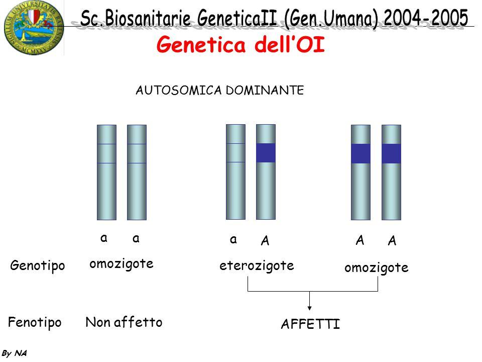 By NA AUTOSOMICA DOMINANTE Genotipo Fenotipo a a a A A A omozigote eterozigote Non affetto AFFETTI Genetica dell'OI