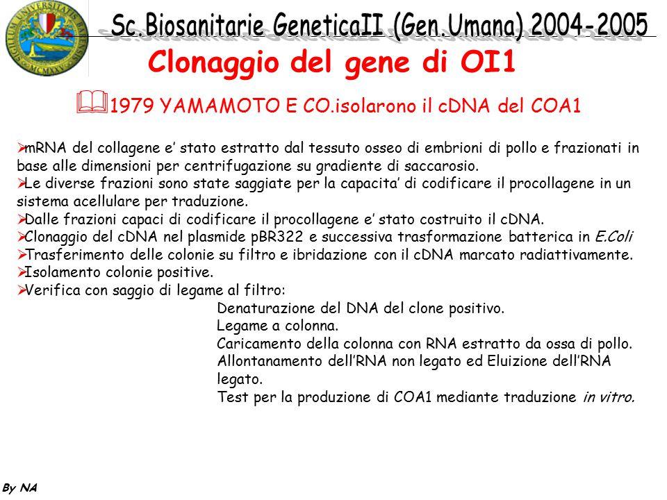 By NA  1979 YAMAMOTO E CO.isolarono il cDNA del COA1  mRNA del collagene e' stato estratto dal tessuto osseo di embrioni di pollo e frazionati in ba