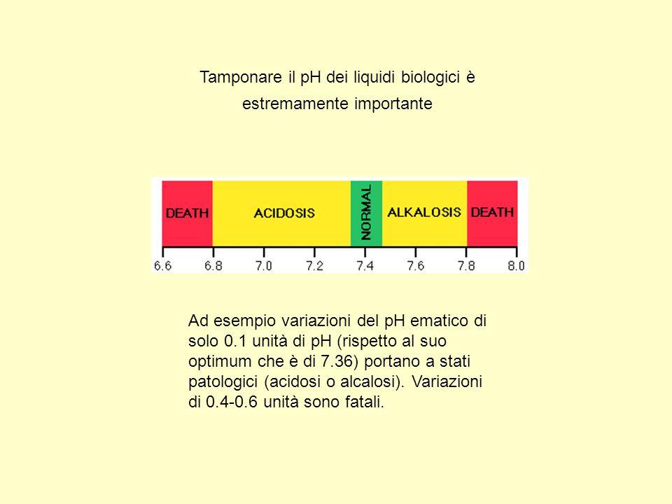 Tamponare il pH dei liquidi biologici è estremamente importante Ad esempio variazioni del pH ematico di solo 0.1 unità di pH (rispetto al suo optimum