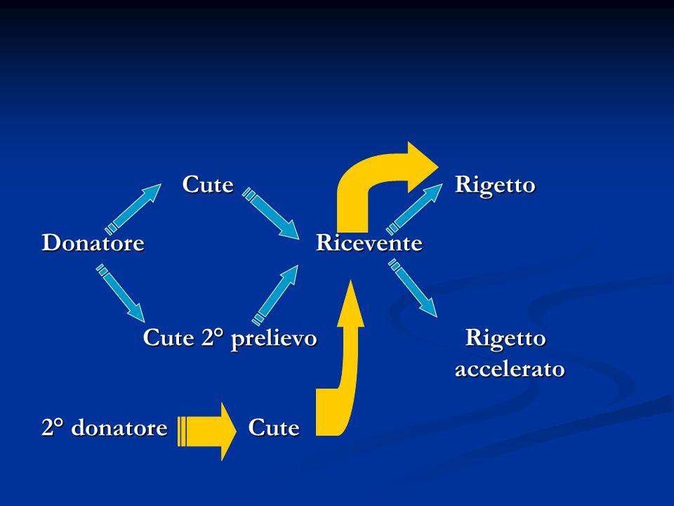 Cute Rigetto Cute Rigetto Donatore Ricevente Cute 2° prelievo Rigetto Cute 2° prelievo Rigetto accelerato accelerato 2° donatore Cute