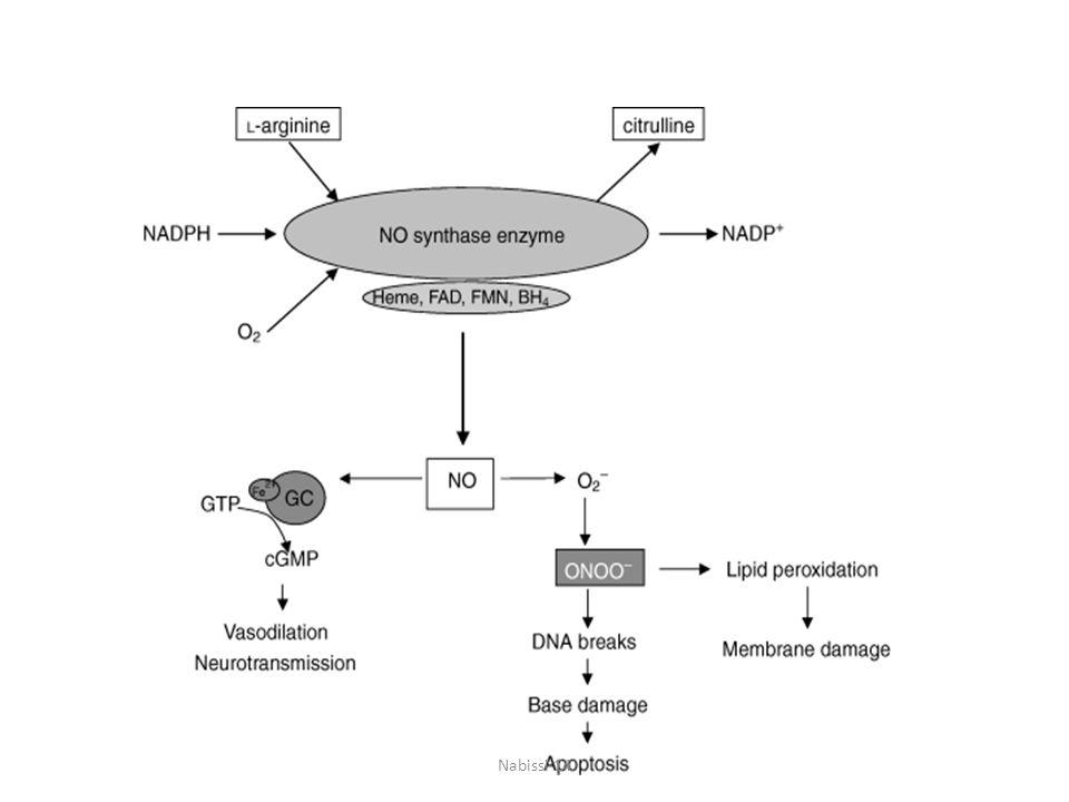 Inoltre NO riduce l'aggregazione e l'adesione inibendo alcune caratteristiche dell'infiammazione indotta dai mastociti e funge da regolatore endogeno