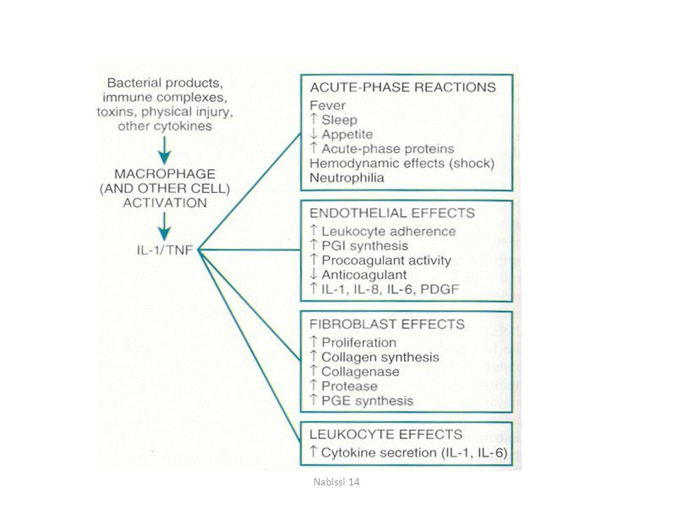 La regolazione negativa dell'azione delle citochine è svolta da citochine anti- infiammatorie, come IL-10 e TGF-  prodotti dai monociti-macrofagi  Un'altra regolazione negativa è indotta dalla produzione di ACTH da parte dell'ipofisi, indotta da fattori ipotalamici stimolati da IL-1 e TGF (feedback negativo).