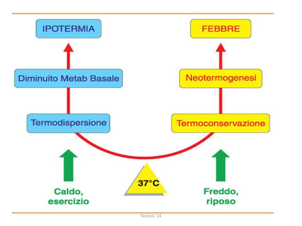 La febbre caratteristica nei processi infiammatori è causata da una diminuita termodispersione e dall'attivazione dell'espressione di specifici geni (che sono coinvolti nel processo di neotermogenesi) ed è indotta da fattori pirogeni endogeni (citochine pirogene) e prostaglandine (PG).