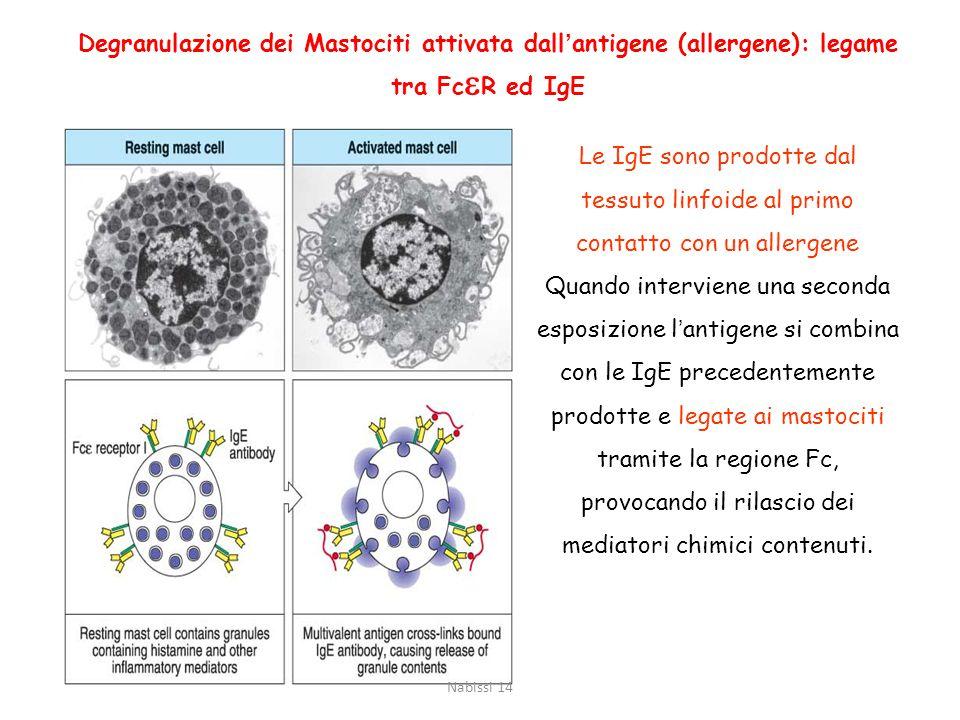 Allergie ed Ipersensibilità Le allergie sono delle reazioni d'ipersensibilità. Una risposta di IgE verso antigeni innocui. L'Ipersensibilità è una rea