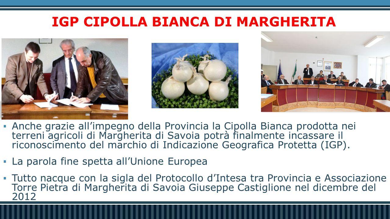 IGP CIPOLLA BIANCA DI MARGHERITA  Anche grazie all'impegno della Provincia la Cipolla Bianca prodotta nei terreni agricoli di Margherita di Savoia potrà finalmente incassare il riconoscimento del marchio di Indicazione Geografica Protetta (IGP).