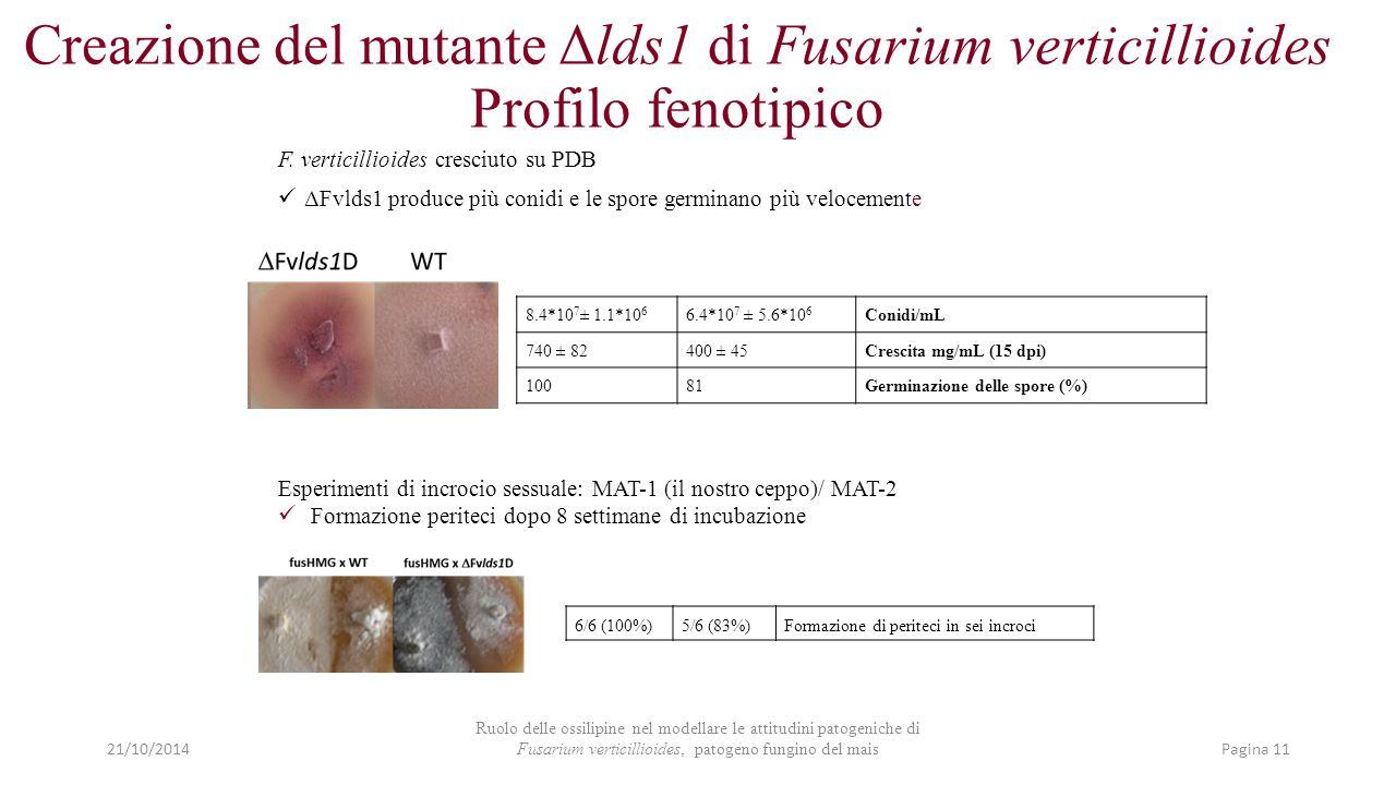 8.4*10 7 ± 1.1*10 6 6.4*10 7 ± 5.6*10 6 Conidi/mL 740 ± 82400 ± 45Crescita mg/mL (15 dpi) 10081Germinazione delle spore (%) F. verticillioides cresciu