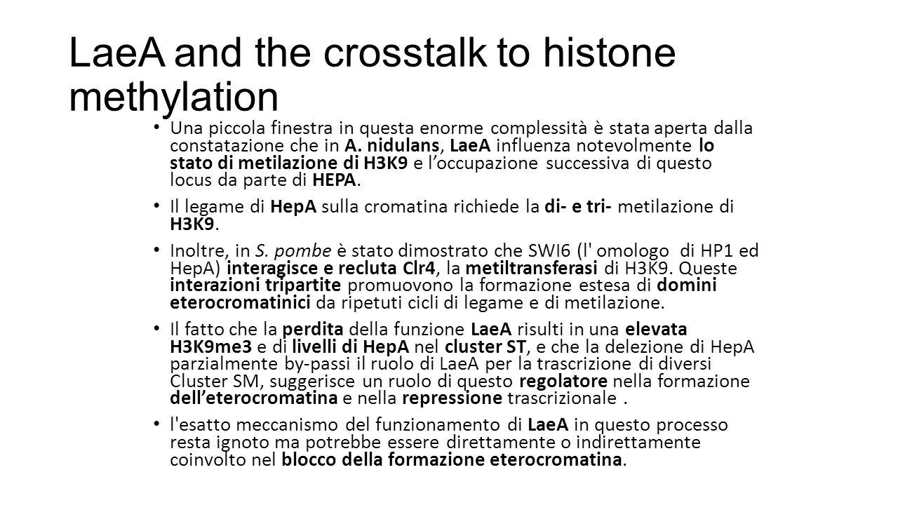 LaeA and the crosstalk to histone methylation Una piccola finestra in questa enorme complessità è stata aperta dalla constatazione che in A. nidulans,