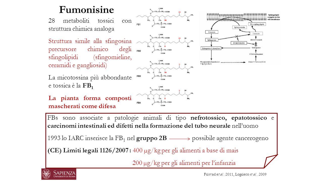 28 metaboliti tossici con struttura chimica analoga Struttura simile alla sfingosina precursore chimico degli sfingolipidi (sfingomieline, ceramidi e