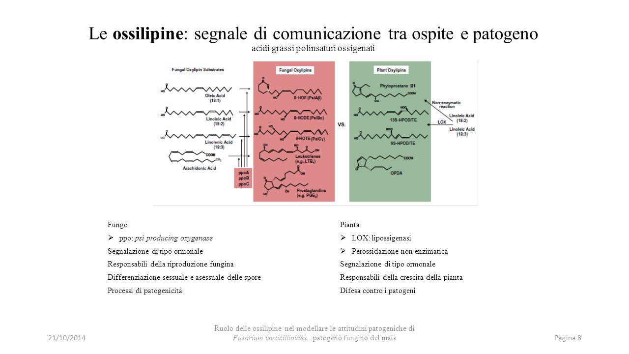 Le ossilipine: segnale di comunicazione tra ospite e patogeno acidi grassi polinsaturi ossigenati Fungo  ppo: psi producing oxygenase Segnalazione di