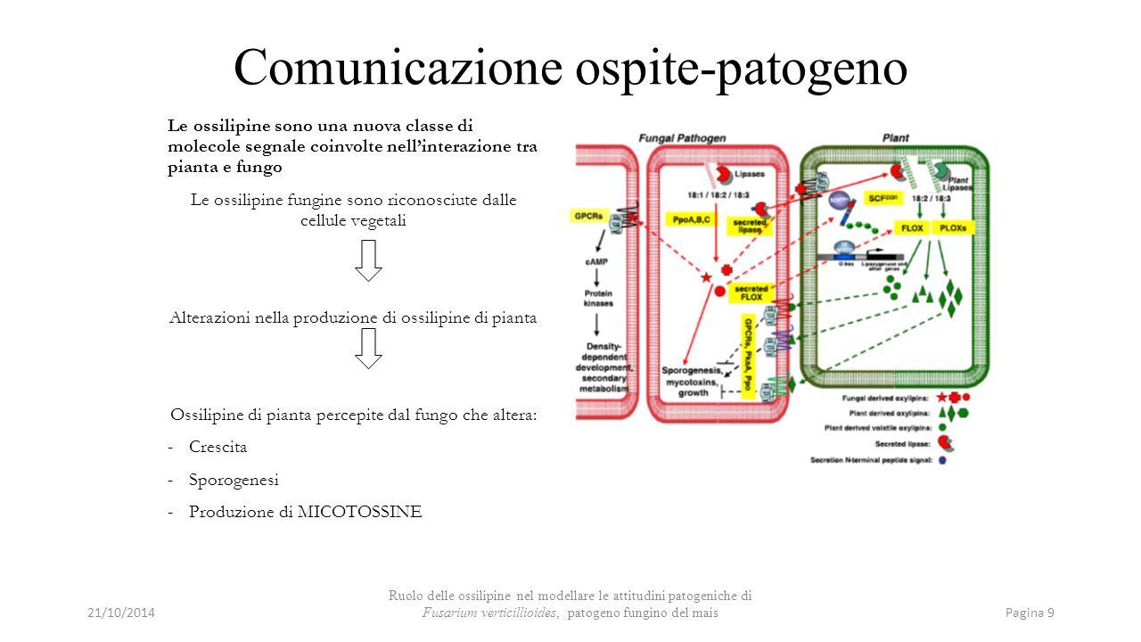 Comunicazione ospite-patogeno Le ossilipine sono una nuova classe di molecole segnale coinvolte nell'interazione tra pianta e fungo Le ossilipine fung