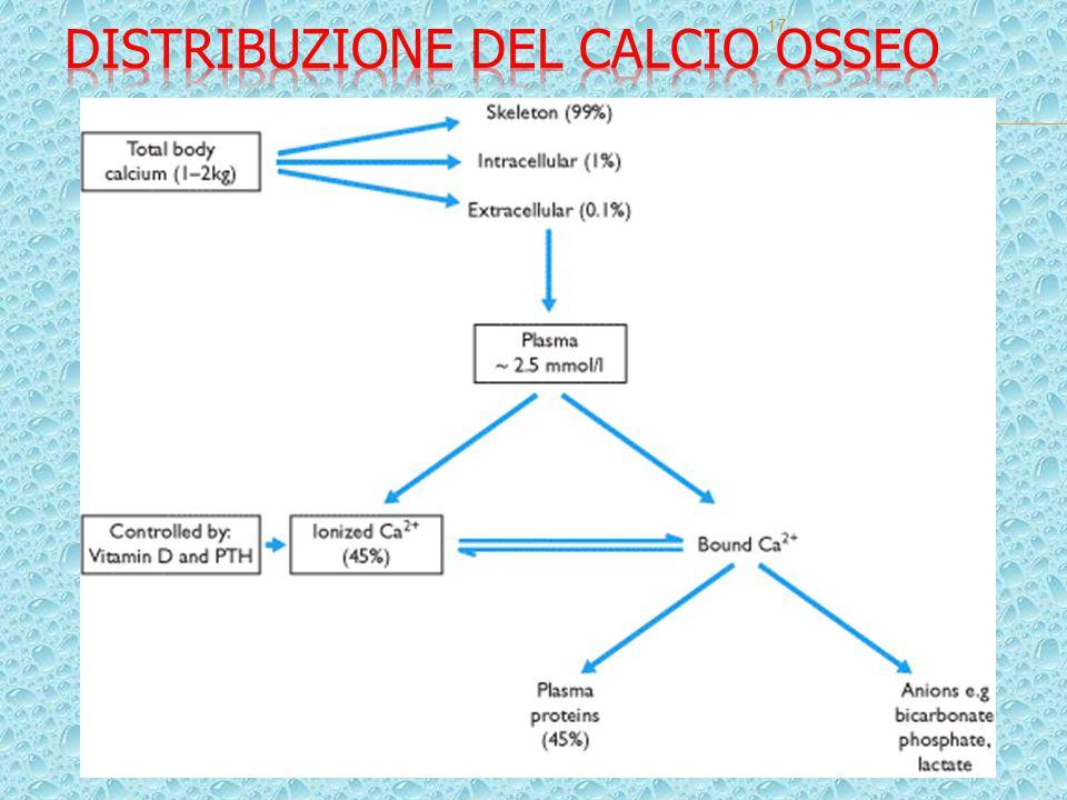 18 La struttura base è il ciclopentanoperidrofenantrene formato da fenantrene (idrocarburo aromatico policiclico, A+B+C) con aggiunta di un ciclopentano (D) Da esso deriva il Colestano, C-27, che a sua volta genera i seguenti idrocarburi capostipiti degli steroidi: a) colano (C-24) – capostipite degli acidi biliari, b) pregnano (C-21) - capostipite di: progestinici, glucocorticoidi e mineralocorticoidi c) androstano (C-19) - capostipite degli androgeni d) estrano (C-18) - capostipite degli estrogeni.