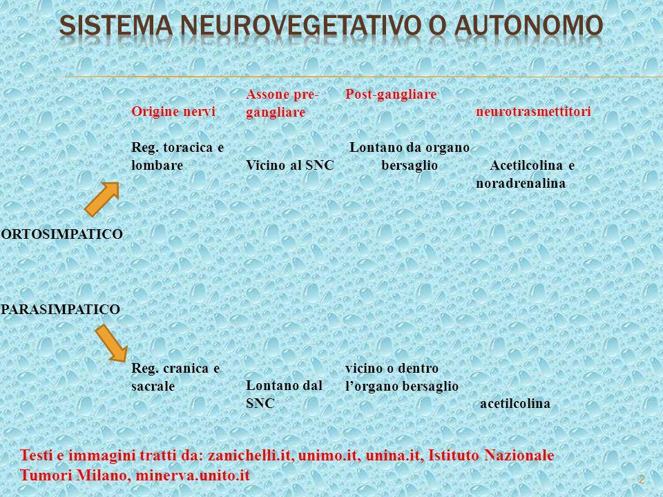 2 Origine nervi Assone pre- gangliare Post-gangliare neurotrasmettitori Reg. toracica e lombareVicino al SNC Lontano da organo bersaglio Acetilcolina