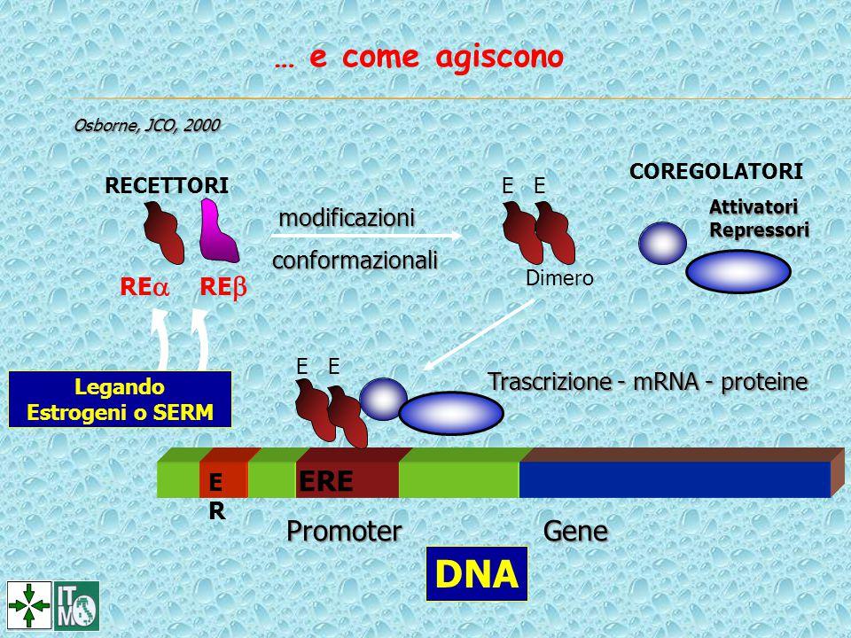 Trascrizione - mRNA - proteine ERER ERE Promoter Gene E COREGOLATORIAttivatoriRepressori modificazioni conformazionali Dimero RECETTORI RE  RE  Lega