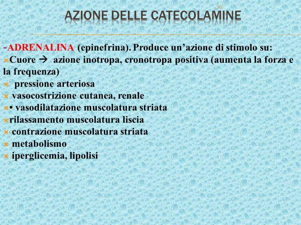 30 - ADRENALINA (epinefrina). Produce un'azione di stimolo su:  Cuore  azione inotropa, cronotropa positiva (aumenta la forza e la frequenza)  pres