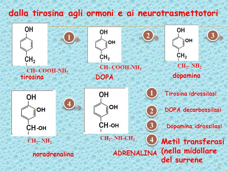 dalla tirosina agli ormoni e ai neurotrasmettotori 31 DOPA CH- COOH-NH 2 tirosina CH- COOH-NH 2 dopamina CH 2 - NH 2 noradrenalina CH 2 - NH 2 ADRENAL
