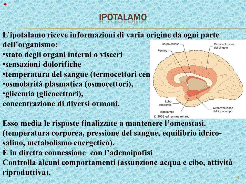 5 I meccanismi centrali di controllo e di integrazione delle funzioni vegetative e le regioni cerebrali coinvolte agiscono nella maggior parte dei casi attraverso l'Ipotalamo, che proietta a vari nuclei vegetativi del tronco encefalico e del midollo spinale.