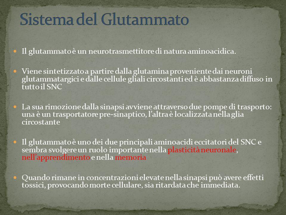 Il glutammato è un neurotrasmettitore di natura aminoacidica. Viene sintetizzato a partire dalla glutamina proveniente dai neuroni glutammatargici e d