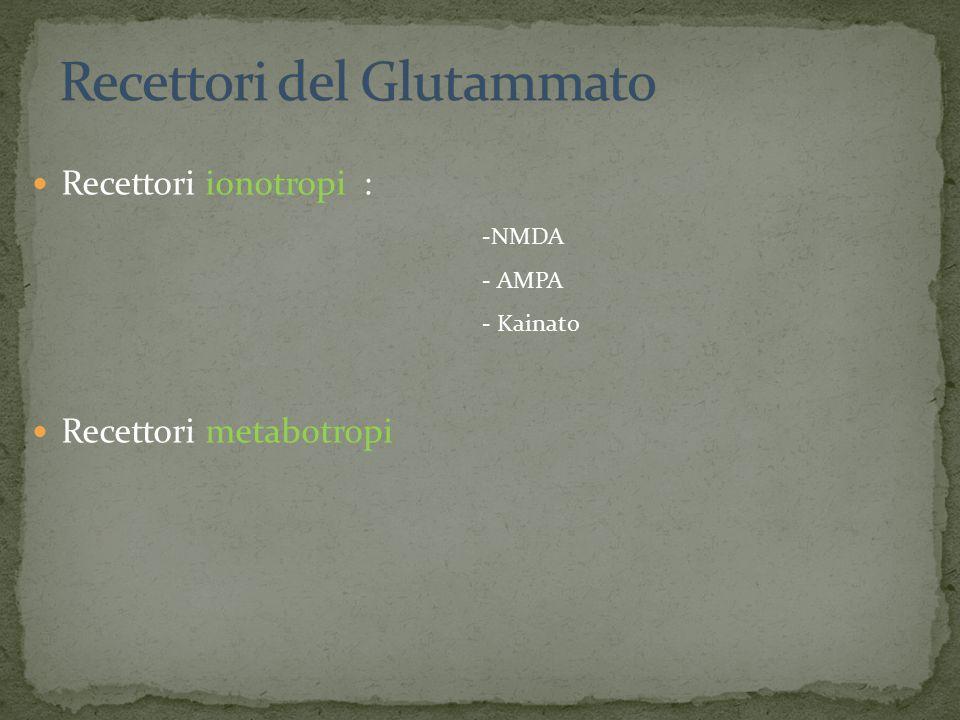 Recettori ionotropi : Recettori metabotropi -NMDA - AMPA - Kainato