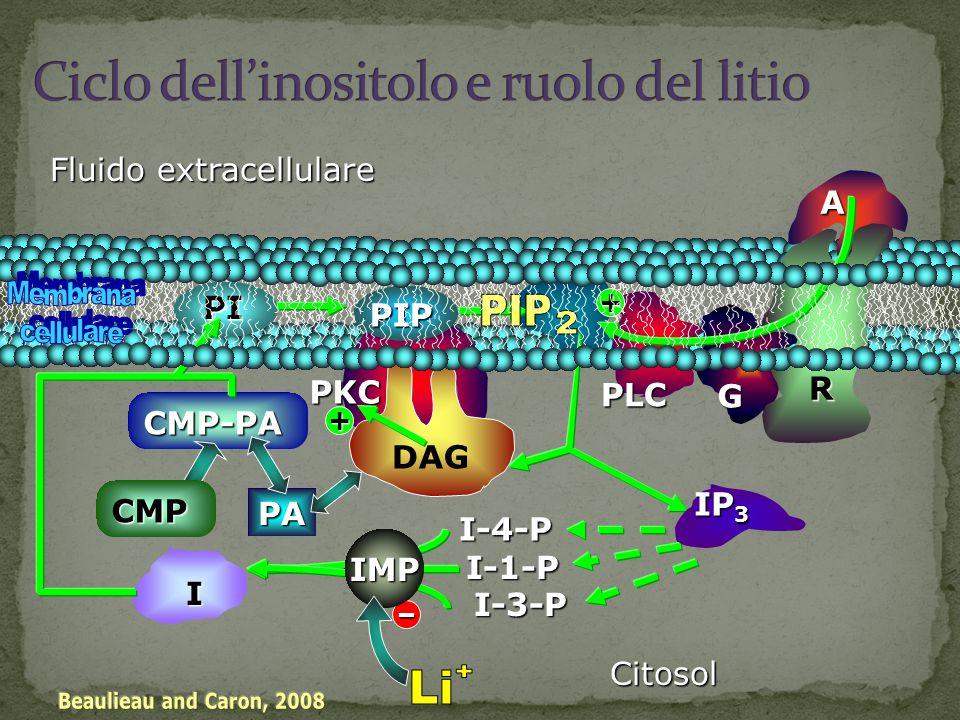 Nella membrana cellulare esistono delle proteine specializzate, chiamate canali del Sodio, del Calcio, del Potassio attraverso i quali passano gli ioni; ed esistono delle pompe del Sodio e del Calcio che lavorano contro gradiente, per la differenza di concentrazioni degli ioni attraverso le membrane consumando energia