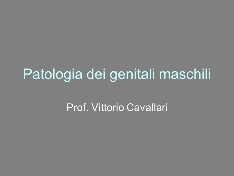 Patologia dei genitali maschili Prof. Vittorio Cavallari