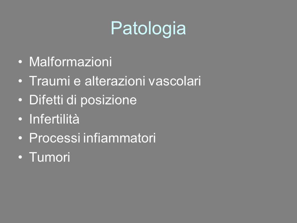 Patologia Malformazioni Traumi e alterazioni vascolari Difetti di posizione Infertilità Processi infiammatori Tumori