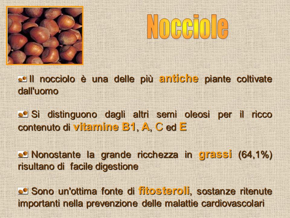 Il nocciolo è una delle più antiche piante coltivate dall'uomo Il nocciolo è una delle più antiche piante coltivate dall'uomo Si distinguono dagli alt
