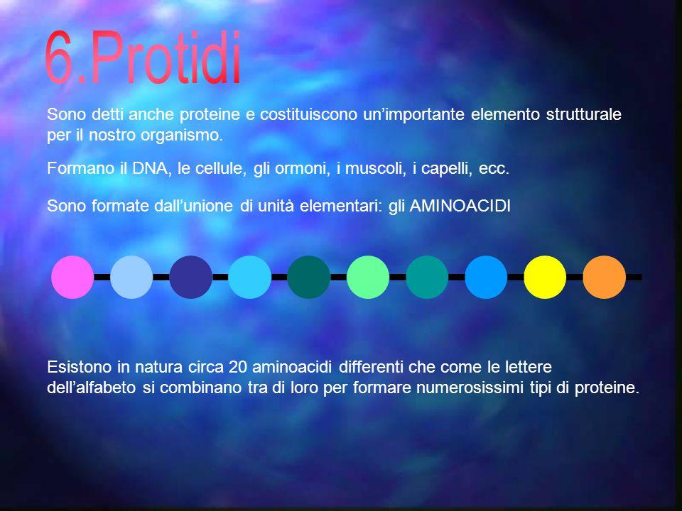 Sono detti anche proteine e costituiscono un'importante elemento strutturale per il nostro organismo.