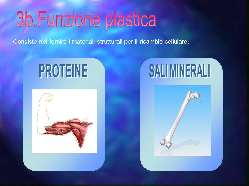 Consiste nel fornire i materiali strutturali per il ricambio cellulare.