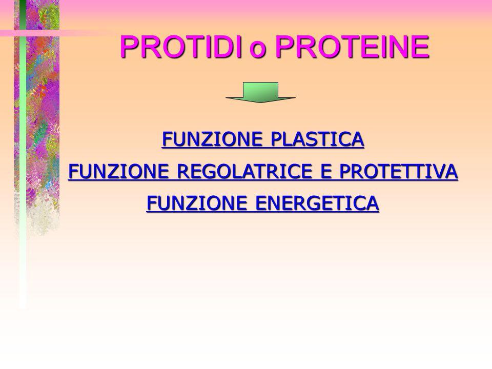 PROTIDI o PROTEINE FUNZIONE PLASTICA FUNZIONE REGOLATRICE E PROTETTIVA FUNZIONE ENERGETICA
