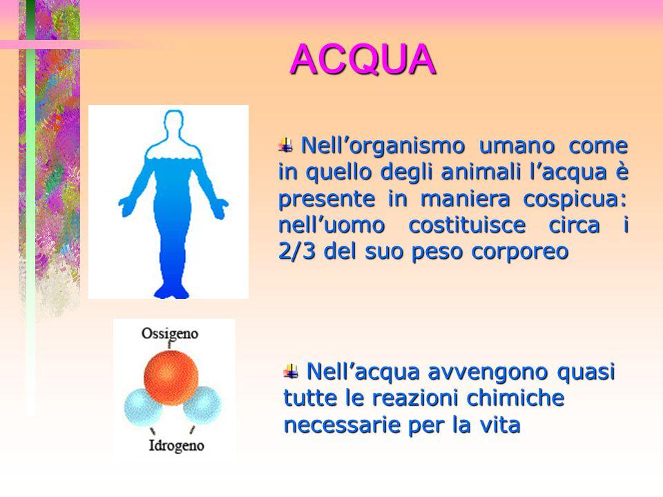 ACQUA La maggior parte delle sostanze nutritive presenti nel corpo vengono trasportate dall'acqua La maggior parte delle sostanze nutritive presenti nel corpo vengono trasportate dall'acqua L'acqua contribuisce, evaporando con il sudore, a regolare la temperatura corporea L'acqua contribuisce, evaporando con il sudore, a regolare la temperatura corporea