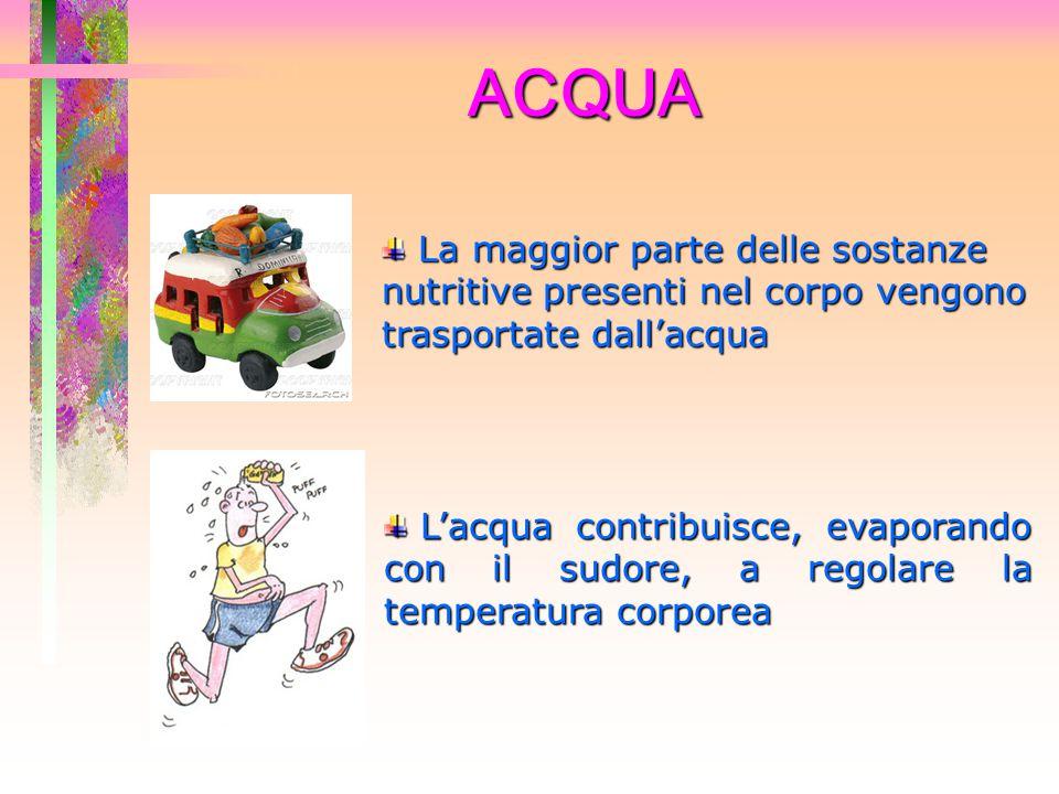ACQUA La maggior parte delle sostanze nutritive presenti nel corpo vengono trasportate dall'acqua La maggior parte delle sostanze nutritive presenti n