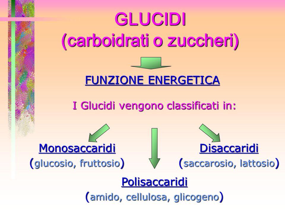 GLUCIDI (carboidrati o zuccheri) FUNZIONE ENERGETICA Monosaccaridi ( glucosio, fruttosio ) Polisaccaridi ( amido, cellulosa, glicogeno ) Disaccaridi (