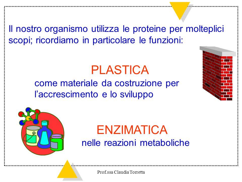 Il nostro organismo utilizza le proteine per molteplici scopi; ricordiamo in particolare le funzioni: PLASTICA come materiale da costruzione per l'acc