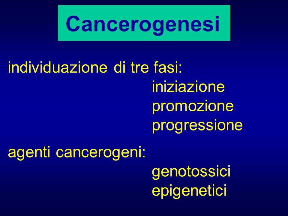 Cancerogenesi individuazione di tre fasi: iniziazione promozione progressione agenti cancerogeni: genotossici epigenetici
