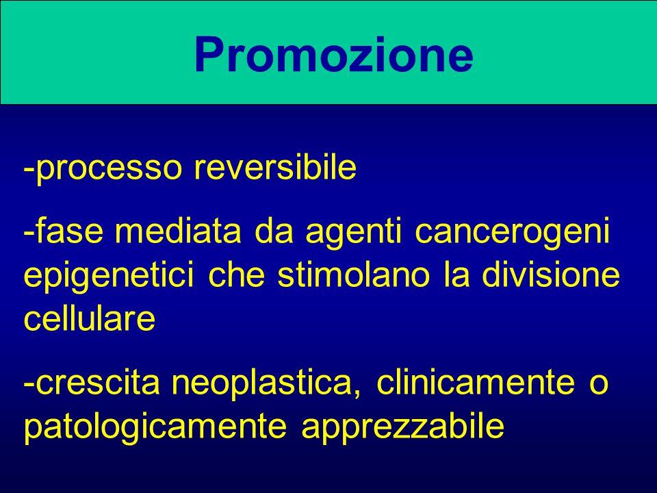 Promozione -processo reversibile -fase mediata da agenti cancerogeni epigenetici che stimolano la divisione cellulare -crescita neoplastica, clinicame
