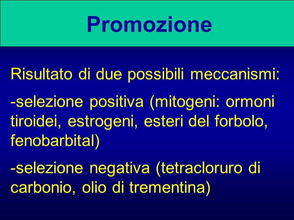 Promozione Risultato di due possibili meccanismi: -selezione positiva (mitogeni: ormoni tiroidei, estrogeni, esteri del forbolo, fenobarbital) -selezi