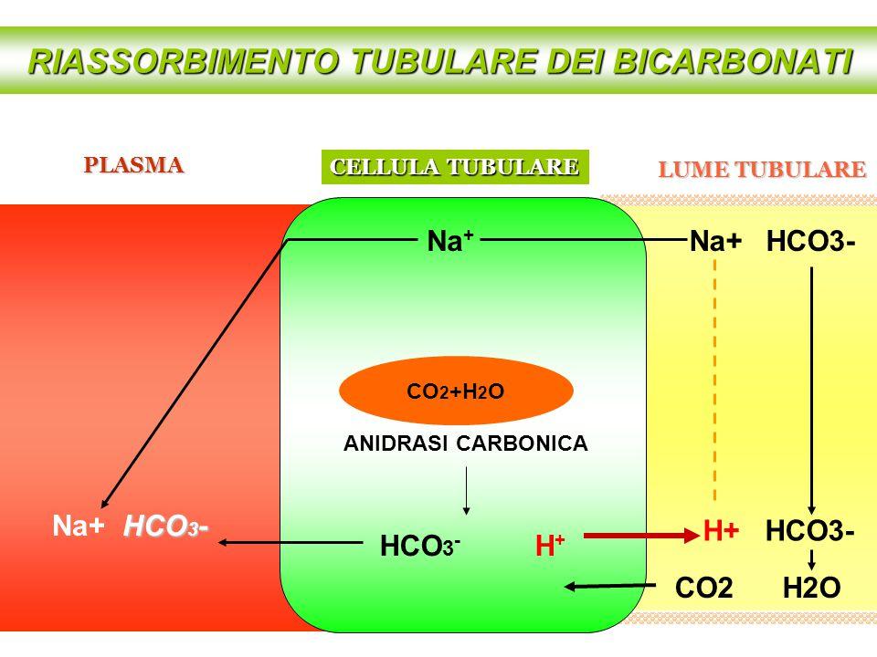 RIASSORBIMENTO TUBULARE DEI BICARBONATI HCO 3 - H + CELLULA TUBULARE CO 2 +H 2 O ANIDRASI CARBONICA H+ HCO3- Na + PLASMA LUME TUBULARE Na+ HCO3- CO2 H