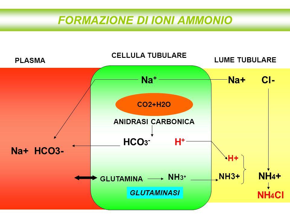 FORMAZIONE DI IONI AMMONIO HCO 3 - H + CELLULA TUBULARE CO2+H2O ANIDRASI CARBONICA NH3+ NH 4 + Na + PLASMA LUME TUBULARE Na+ Cl- NH 4 Cl Na+ HCO3- GLU