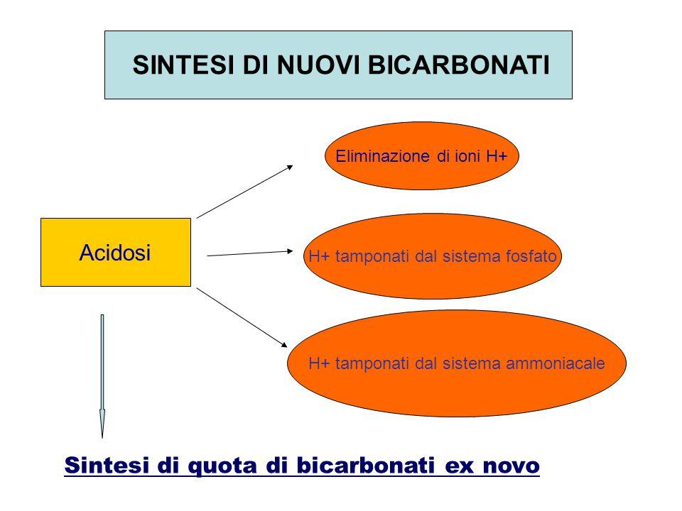 SINTESI DI NUOVI BICARBONATI Acidosi Eliminazione di ioni H+ H+ tamponati dal sistema fosfato H+ tamponati dal sistema ammoniacale Sintesi di quota di