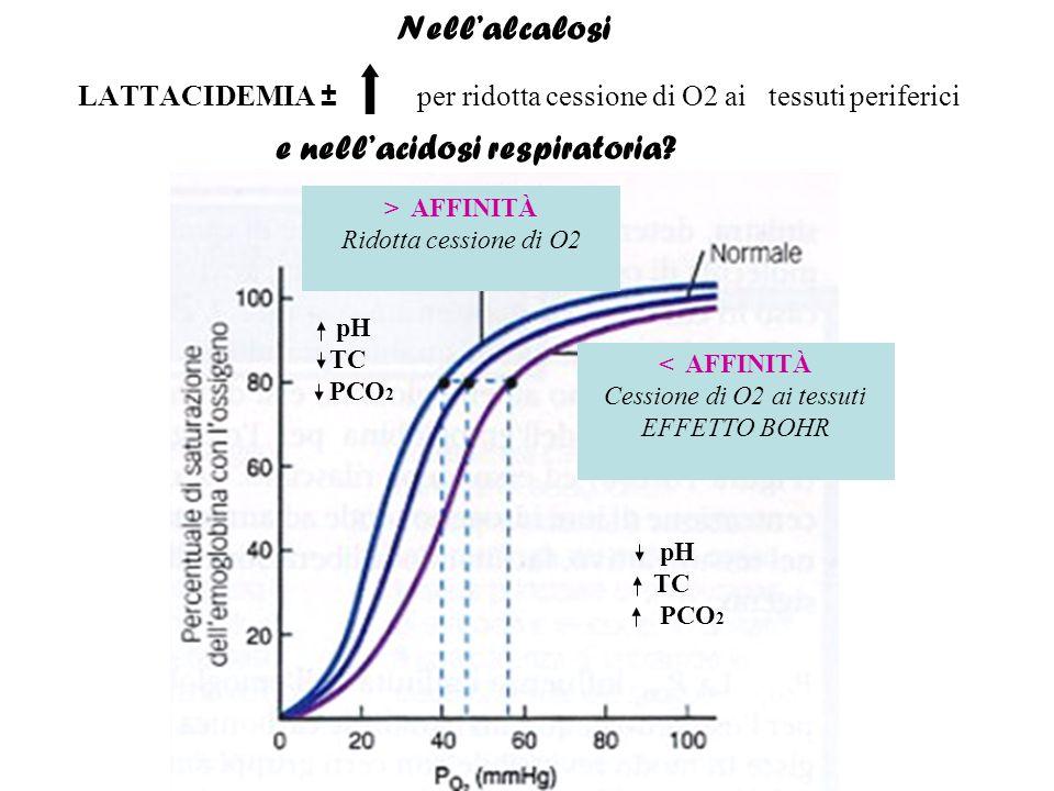 LATTACIDEMIA ± per ridotta cessione di O2 ai tessuti periferici e nell'acidosi respiratoria? Nell'alcalosi pH TC PCO 2 pH TC PCO 2 < AFFINITÀ Cessione