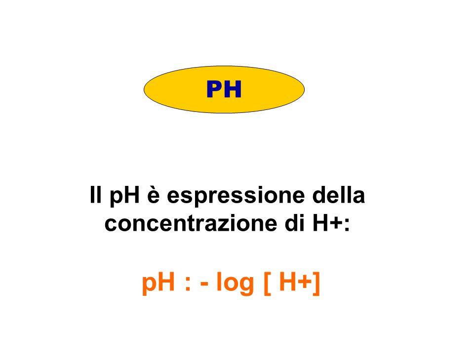 Il pH è espressione della concentrazione di H+: pH : - log [ H+] PH