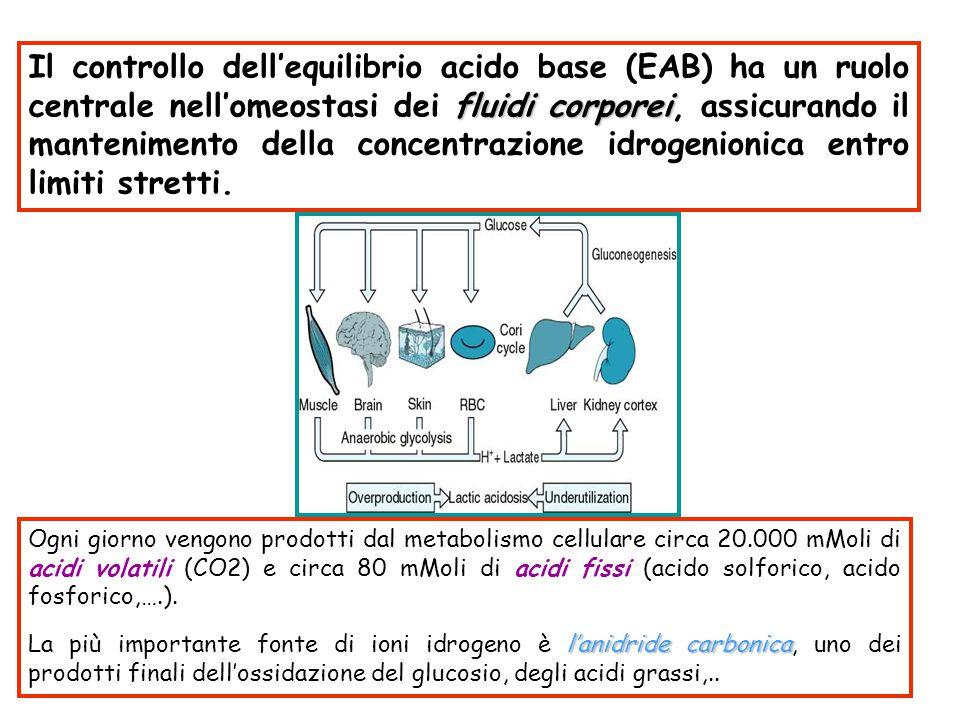 fluidi corporei Il controllo dell'equilibrio acido base (EAB) ha un ruolo centrale nell'omeostasi dei fluidi corporei, assicurando il mantenimento del