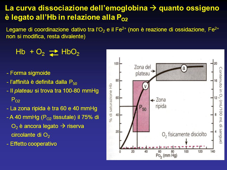 - Forma sigmoide - l'affinità è definita dalla P 50 - Il plateau si trova tra 100-80 mmHg P O2 - La zona ripida è tra 60 e 40 mmHg - A 40 mmHg (P O2 t