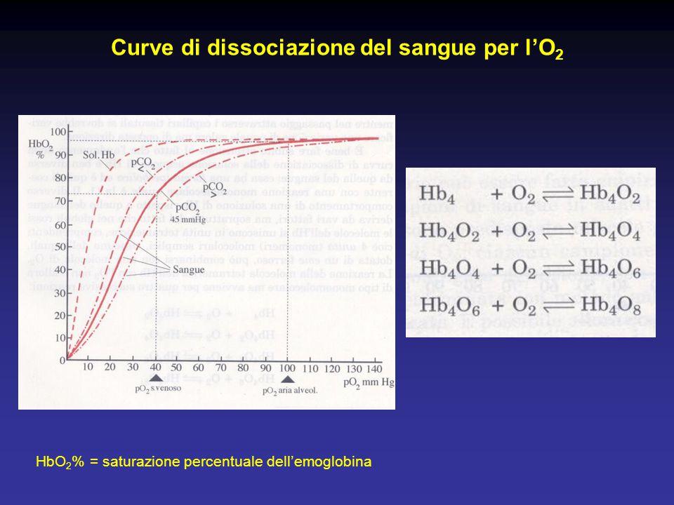 Curve di dissociazione del sangue per l'O 2 HbO 2 % = saturazione percentuale dell'emoglobina Pg 558 casella
