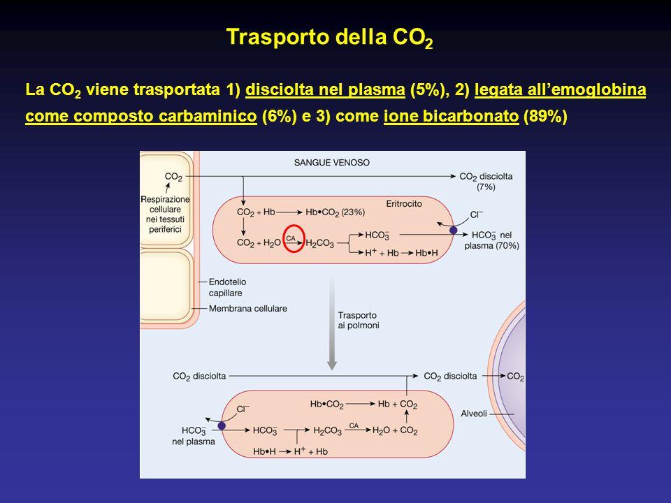 Trasporto della CO 2 La CO 2 viene trasportata 1) disciolta nel plasma (5%), 2) legata all'emoglobina come composto carbaminico (6%) e 3) come ione bi