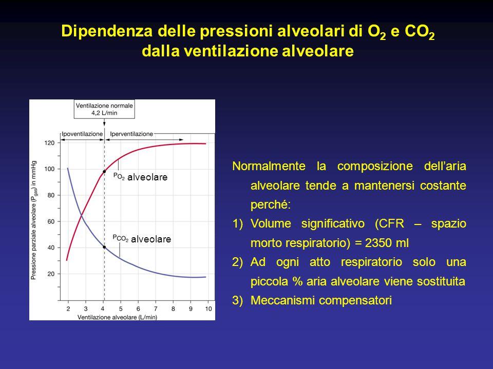alveolare Normalmente la composizione dell'aria alveolare tende a mantenersi costante perché: 1)Volume significativo (CFR – spazio morto respiratorio)