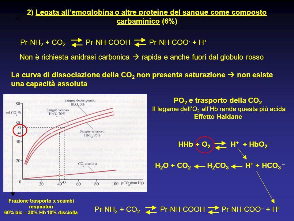 2) 2) Legata all'emoglobina o altre proteine del sangue come composto carbaminico (6%) Pr-NH 2 + CO 2 Pr-NH-COOH Pr-NH-COO - + H + Non è richiesta ani